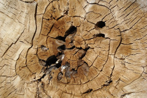 Movimento-legno