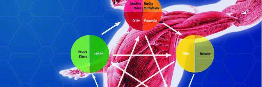 SCUOLA DI ARTE MEDICA INTEGRATA – Kinesiologia Secondo Anno