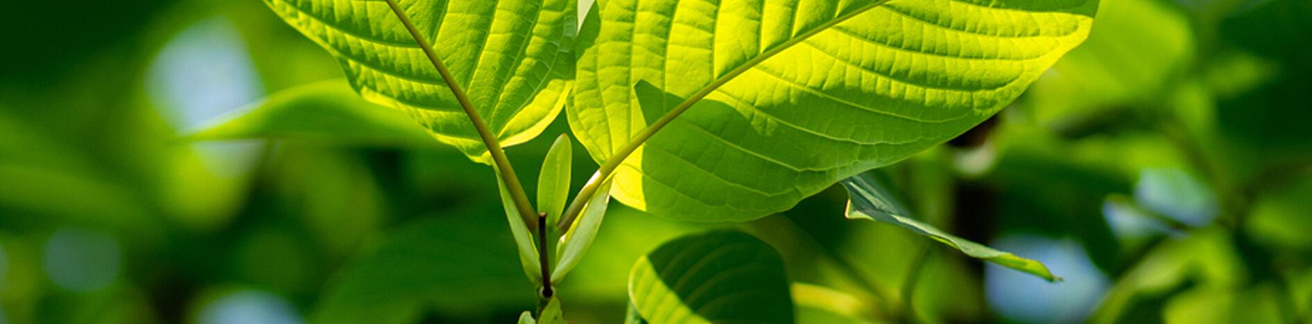 Piante naturali prodotti Arcangea