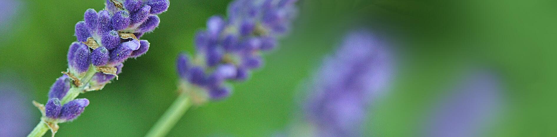 Piante naturali per il benessere del corspo | Arcangea.it