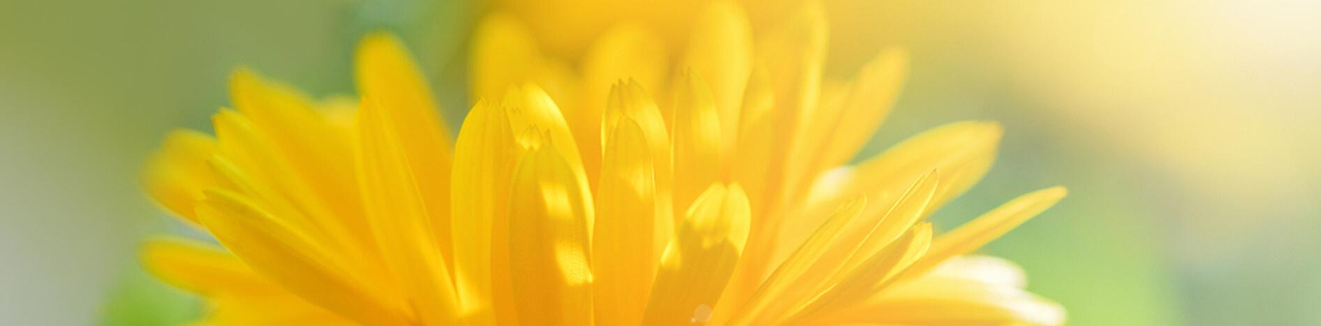 Fiore dei prodotti naturali Arcangea.it